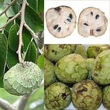Cherimoya fruto
