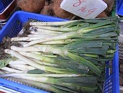 Welsh-onion-2.jpg